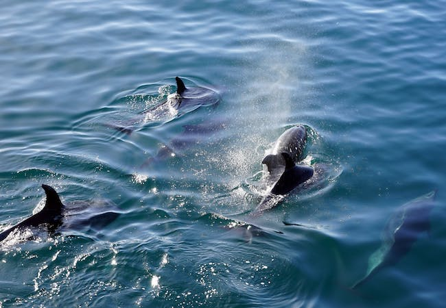 myrtle beach dolphin cruise coupons