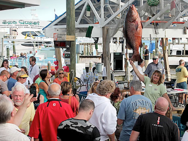 Destin Fishing Rodeo Shark Saturday