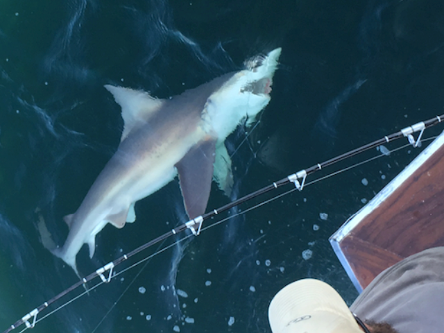 Okaloosa Island Shark Fishing Charter