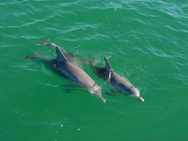Beached dolphins - photo#38